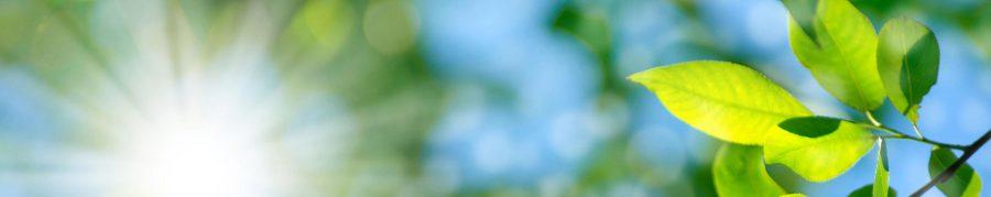 """Diplomierter Systemischer Coach (DGCO), Zürcher Ressourcen Modell (ZRM®)-Trainer nach Frank Krause und Maja Storch (ISMZ), PSI- Kompetenzberater nach Prof. Dr. Julius Kuhl (Universität Osnabrück und Institut PSI-Schweiz), Persönlichkeits- und Ressourcenorientierter Berater PRB® (Institut PSI Schweiz), EC-Trainer (ISMZ), """"Canadier-Touren/Floßbau""""-Trainer, """"Top TeamerIn NaTour"""", Hochseilgarten-Trainer (ERCA)"""